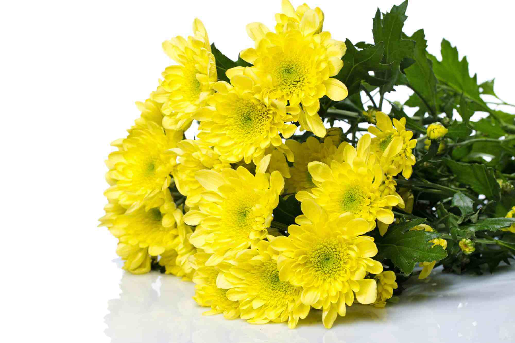 Buddhist funeral bouquet of yellow chrysanthemums